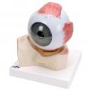 Velký model oka