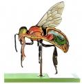 Anatomický model včely dělnice (Apis mellifera)