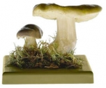 Čirůvka zelánka (Tricholoma flavovirens)
