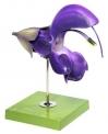 Květ šalvěje luční (Salvia pratensis)