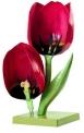 Květ tulipánu, zvětšení 4x (Tulipa gesneriana)