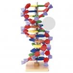 Malý model DNA