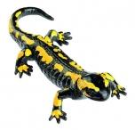 Mlok skvrnitý západní - sameček (Salamandra terrestris)