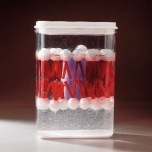 Model biologické membrány