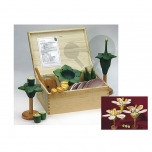 Model květu - kufřík