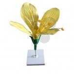 Model květu
