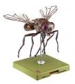 Model mouchy domácí (Musca domestica)