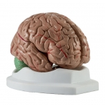 Mozek, rozložitelný na 4 části