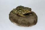 Ropucha krátkonohá (Bufo calamita)