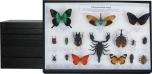 Sbírka světového hmyzu