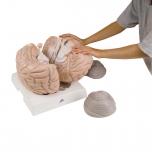 Velký model mozku